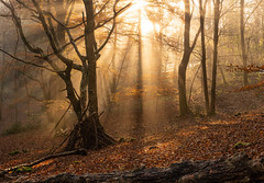 Sunlight at Hawes End (www.peterhenryphotography.com) Tags: sunlight mist woodland trees leaves autumn colour forest lakedistrict cumbria