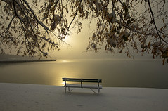 Energy of the Mind (Matt Champlin) Tags: mind life seat bench winter november quiet calm calming nature contemplation skaneateles snow snowy cold chilly landscape peaceful canon 2019 home lake sunrise dawn