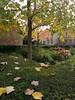 Autumnal scene.