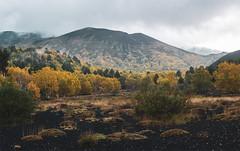 Autumn at the Etna volcano (raffaeledirosa) Tags: etna volcano landscape nature autumn trees green
