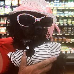 Dog at Walmart - 1 (booboo_babies) Tags: dog walmart dogcostume silly hat sunglasses shopping costume