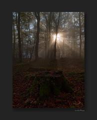 November glory (Odenwald-Fotograf) Tags: forest wald autumn fall herbst odenwald hessen sunbeams gegenlicht