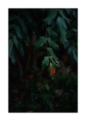 This work is 7/15 works taken on 2019/10/14 (shin ikegami) Tags: sony ilce7m2 a7ii sonycamera 50mm lomography lomoartlens newjupiter3 tokyo 単焦点 iso800 ndfilter light shadow 自然 nature naturephotography 玉ボケ bokeh depthoffield art artphotography japan earth asia portrait portraitphotography
