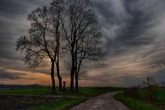 katki_57_F (marcin.kolakowski) Tags: autumn jesień wieś polska przyroda drzewa