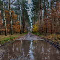 katki_52_F (marcin.kolakowski) Tags: autumn jesień wieś polska przyroda drzewa