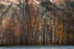 17112019-DSC_0057 (vidjanma) Tags: bonnerue arbres automne brume givre liumière matin