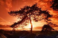 Franchard gorges (hbensliman.free.fr) Tags: travel nature tourism forest france trees foliage pentax pentaxart pentaxk1 sunrise