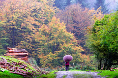 IRUDI art (juan luis olaeta) Tags: paisajes landscape autumn otoño basoa udazkena raw photoshop fujifilm fujifilmxt3 forest tree