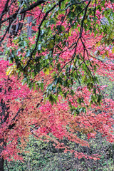 Backbone State Park Series (vickieklinkhammer) Tags: tree flower plant leaf park maple branch pink season outdoor fall woodyplant grass nature green petal forest landscape flora autumn sitting deciduous area color floweringplant field wood blossom outdoors temperatebroadleafandmixedforest red conifer northernhardwoodforest standing path scene twig large scenery group bright shrub mapleleaf garden grassy macro afternoon misty colorful wind