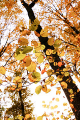 Autumn colours #7 (Ôo) Tags: autumn fall colorful colour fujixt20 fujifilm fuji forêt forest wood