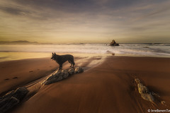 Good company (IrreBerenTe Natalia Aguado) Tags: euskadibasquecountry paisvasco euskadi goodcompany nataliaaguadoirreberente arrietara atxbiribil sopelana costavasca bizkaia sopela sunset longexposure seascape landscape beach nature animal blackdog dog