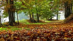 Colori d'autunno (Guardare in large premere L) (Ferruccio Zanone) Tags: foglie colori autunno pioggia silenzio giallo