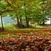 Colori d'autunno (Guardare in large premere L)