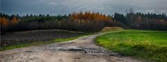 katki_50_F (marcin.kolakowski) Tags: autumn jesień wieś polska przyroda drzewa
