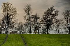katki_48_1_F (marcin.kolakowski) Tags: autumn jesień wieś polska przyroda drzewa