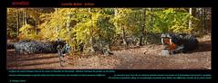NIDHÖGG   le dragon © Forêt verte (philippedaniele) Tags: sculptures exposition promenadeforestière feuillus hêtres seine maritime fabuleuse