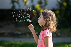 (slezo) Tags: canoneos6dmarkii canonef100mmf2usm primelens kid child girl dandelion 100mm outdoor
