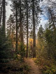 Nature Trail (helenehoffman) Tags: naturetrail california trail autumn trees mountain palomarmountainstatepark forest