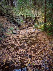Doane Creek (helenehoffman) Tags: autumn doanecreek forest naturetrail trail water trees california leaves palomarmountainstatepark mountain