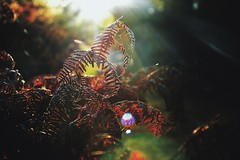las (Małgorzata M-K) Tags: polska las jesień zachód paproć kolor natura autumn forest nature naturephotography color light