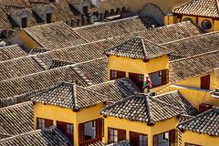 Mezquita Rooftop (amarilloladi) Tags: spain españa tile windows windowwednesday tileroof roof rooftop córdobaspain córdoba mezquita cathedraloftheassumptionofourlady church cathedral