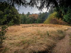 Sheltering From the Rain (helenehoffman) Tags: autumn forest naturetrail trail california meadow trees rain palomarmountainstatepark mountain