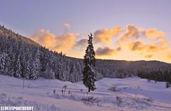 Quiétude (Elouan Astrowild) Tags: neige vercors fontdurle alpes sapin soir coucherdesoleil foret bois plaine congère nuages ciel bleu blanc prèsalpes europe france altitude calme lumière tronc poudreuse hiver