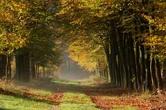 forest path (dewollewei) Tags: forest path autumn fall road colors herfst kleuren ommen overijssel vechtdal trees light lokt through