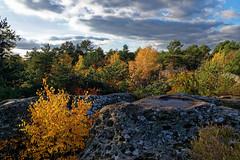 Franchard gorges (hbensliman.free.fr) Tags: travel nature tourism forest france trees foliage pentax pentaxart pentaxk1 rocks