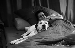 m&m ... (andrealinss) Tags: schwarzweiss bw blackandwhite availablelight portrait dog chien hund andrealinss 35mm