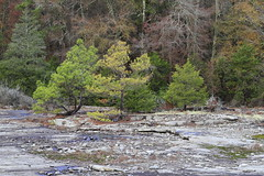 Landscape with Evergreens (DayBreak.Images) Tags: dekalbcounty georgia arabiamtn naturepreserve landscape evergreens canondslr canoneflens canon2470mmf4l