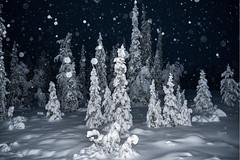 Snowing by night (ikkasj) Tags: taigametsä taigaforest lapland snow winter finland pallasyllästunturinationalpark
