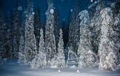 Snowing by night (ikkasj) Tags: taigametsä taigaforest lapland snow winter finland pallasyllästunturinationalpark doubleexposure
