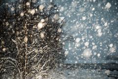 Snowing (ikkasj) Tags: snow lapland lappi winter flash