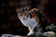 """MEIGA"" #photooftheday #photography #catsofinstagram #fauna #animales #nature #500px #landscape #colors #naturaleza #cat #gato #expressión #galeoska #reflejos #imagination #saffsunset #zoom #vilagarciadearousa #pontevedra #galicia #galiciavisión #galiciap (saffsunset) Tags: photooftheday pentaxkx fauna reflejos vgaviva catsofinstagram colors galicia amazing naturaleza digitalphotography cat galiciavisión nature gato saffsunset galiciamaxica galeoska zoom imagination pontevedra disfrutargalicia expressión vilagarciadearousa animales galiciapasion 500px queverengalicia photography landscape"