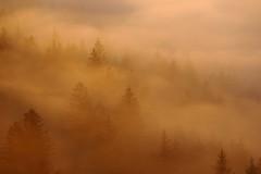Morning fog (Xtraphoto) Tags: nebel fog foggy bäume trees fichten wald forest bayern bavaria morgenlicht morninglight