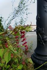 DSC01789 (euskal begia) Tags: fleur réverbère parking