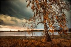 Eine Birke am Wasser (linke64) Tags: thüringen deutschland germany gras natur landschaft laub baum blätter birke wolken wolkenhimmel himmel herbst rahmen wasser teich
