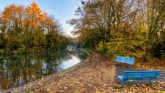 Bridgewater canal in Autumn-2 (andyyoung37) Tags: ayphotography autumntrees bridgewatercanalautumn landscapephotography manorpark runcon uk autumncolour cheshire cheshirem coldmorning runcorn england unitedkingdom