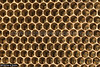43812 After three months the Giant Asiatic Honey Bees (Apis dorsata) have abandoned their nest leaving a honeycomb of empty hexagonal cells. These cells were occupied by larvae. (K Fletcher & D Baylis) Tags: animal wildlife fauna insect eusocial colony superorganism hymenoptera bee honeybee gianthoneybee giantasiatichoneybee megapis apis apisdorsata comb honeycomb nest beesnest cell geometry geometric hexagonal hexagons perak malaysia asia november2019 ©fletcherbaylis