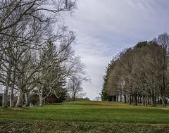 Tree lined field (jsleighton) Tags: field trees sky lawn graveyard stones landscape