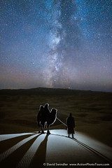 End of the Season (David Swindler (ActionPhotoTours.com)) Tags: dunes gobi gobidesert milkyway mongolia sanddunes camel camelherder night nightphotography nightscape sanddune shadow