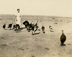 Just Part of the Flock, 1921 (Alan Mays) Tags: turkeys portraits clothing women photos ephemera clothes photographs snapshots foundphotos 1920s birds animals funny humorous humor dresses poultry amusing messages wry captions 1921 flocks old vintage antique