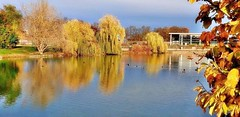 L'automne en novembre -4- (mamietherese1) Tags: world100f