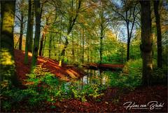 Park Havezate Den Alerdinck (Hans van Bockel) Tags: 1680mm d7200 hansvanbockel lightroom nikkor nikon laagzuthem overijssel nederland havezate den alerdinck park herfst autumn kleuren colours luminar