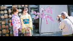 _DSC6194 (kblover24) Tags: sony a7r mk3 a7r3 a7riii riii fe 85 85mm f14 f14gm gm 名古屋 nagoya 犬山城
