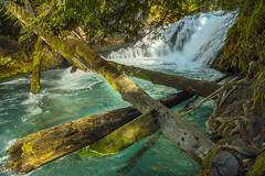 Fallen logs (OregonDOT) Tags: mckenziepass mckenziehighway mckenzie or242 scenicoregon scenic oregondot oregon