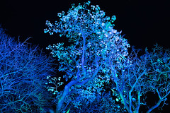 Océan en voie d'Illumination (_| |_) Tags: paris illumination jardindesplantes night nuit light mnhn museum dhistoire naturelle oceanillumine