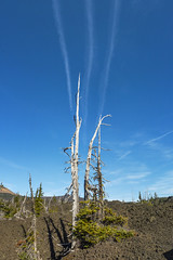 Extending to the sky (OregonDOT) Tags: mckenziepass mckenziehighway mckenzie or242 scenicoregon scenic oregondot oregon