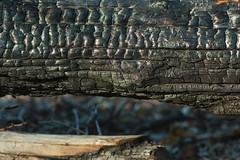 Charred log (OregonDOT) Tags: mckenziepass mckenziehighway mckenzie or242 scenicoregon scenic oregondot oregon
